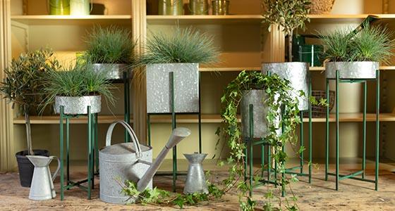Pots Amp Planters