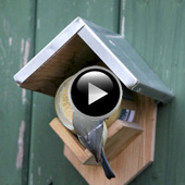 Peanut Butter House Bird Feeder