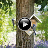 Peanut Butter House Bird Feeder II
